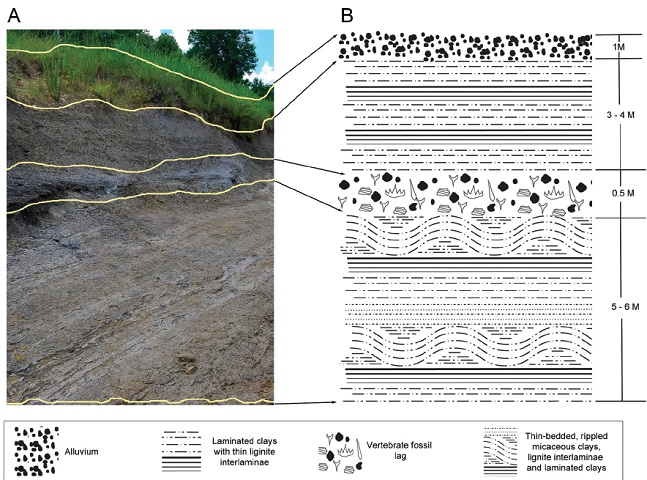 Stratigraphic occurrence of fossils recovered during our study. A) Photograph showing exposure of Eutaw Member strata along south bank of Luxapalila Creek. Solid yellow lines indicate boundaries between beds. B) Simplified stratigraphic column for exposure seen in A (legend shown along bottom). Figure by C.N. Ciampaglio